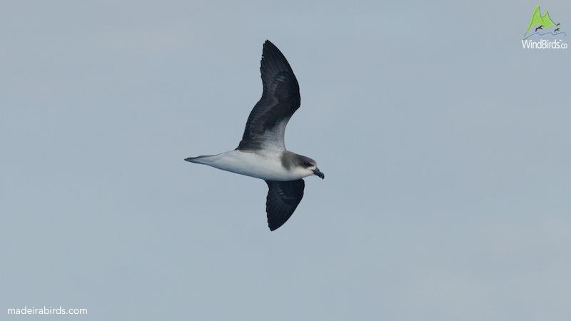 Bird Pelagic Cruise Rhode Island